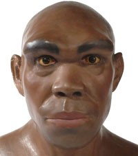 Représentation d' Homo heidelbergensis (http://www.nhm.ac.uk/resources-rx/images/1008/heidel-reconstruction-200-109067-1.jpg)