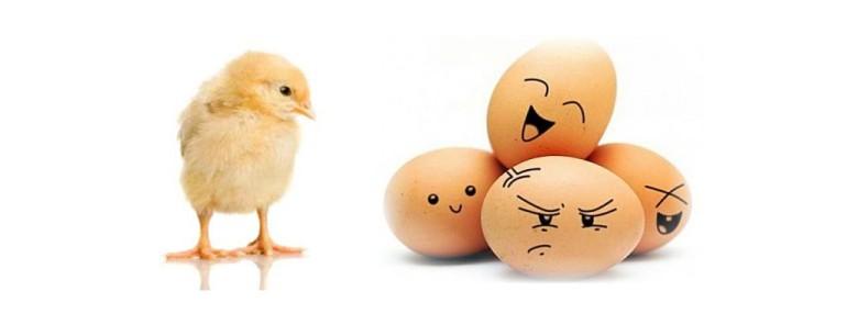 Qui est apparu en premier l 39 uf ou la poule et bien c - Image de la poule ...
