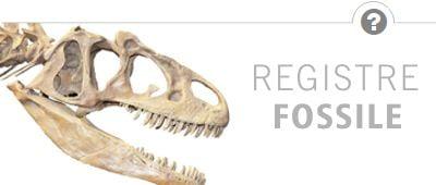 Que nous montrent les données fossiles ?