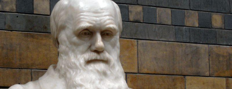 France culture : ce qu'il faut savoir sur Darwin et la théorie de l'évolution