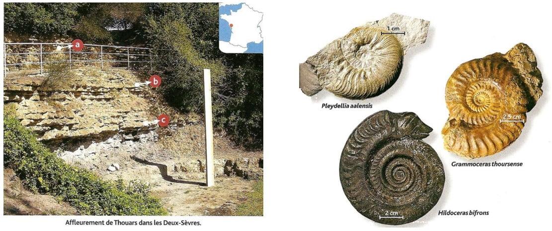 Nommer les deux principales façons de datation des fossiles