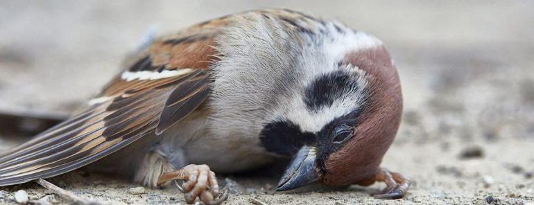 mort douleur oiseau